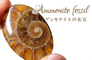 アンモナイト 化石 ルース カボション